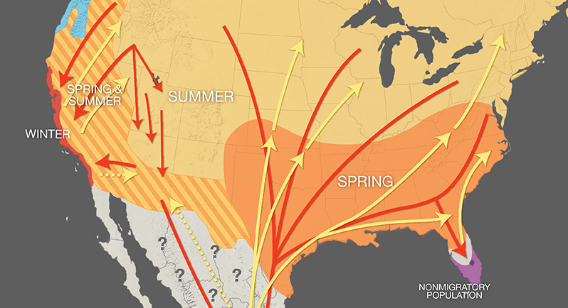 Monarch Migration Map graphic